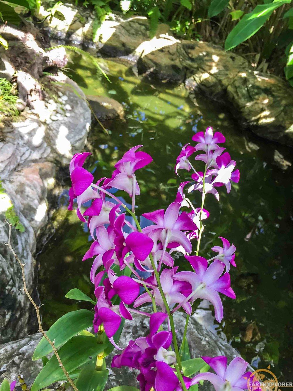 Nevis Botanical Gardens earthXplorer-4.jpg