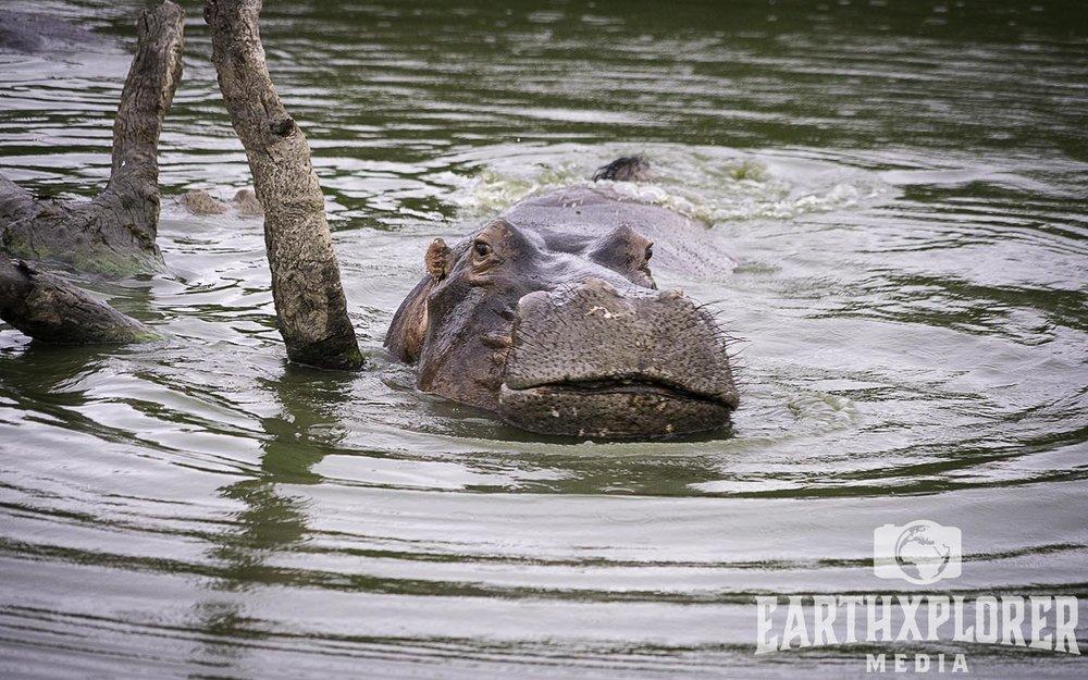 Hello Hippo Soth Africa.jpg