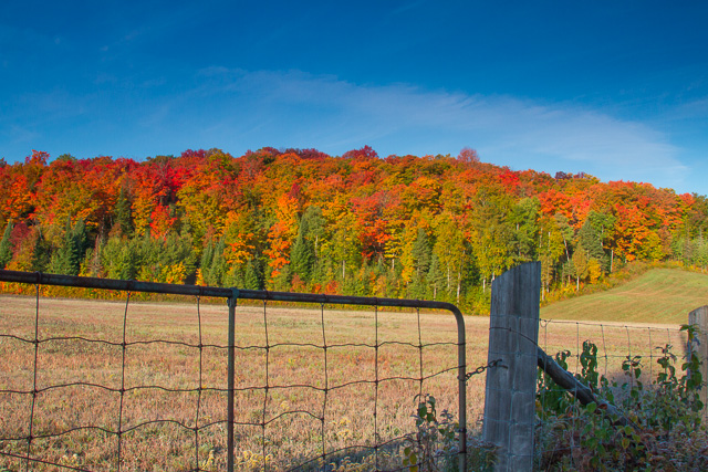 Amazing fall colours off Highway 62, south of Maynooth