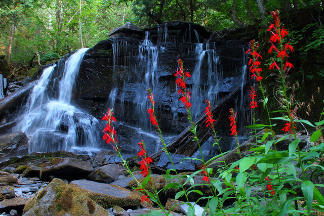 Cardinal Flower in front of falls at end of portage from Stratton Lake to High Falls Lake