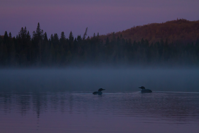 Common Loons on Rabbit Blanket Lake,  Lake Superior Provincial Park , Ontario, Canon 7D with Canon EF 28-300mm @ 135mm, 1/400s @ f/8, ISO 1600