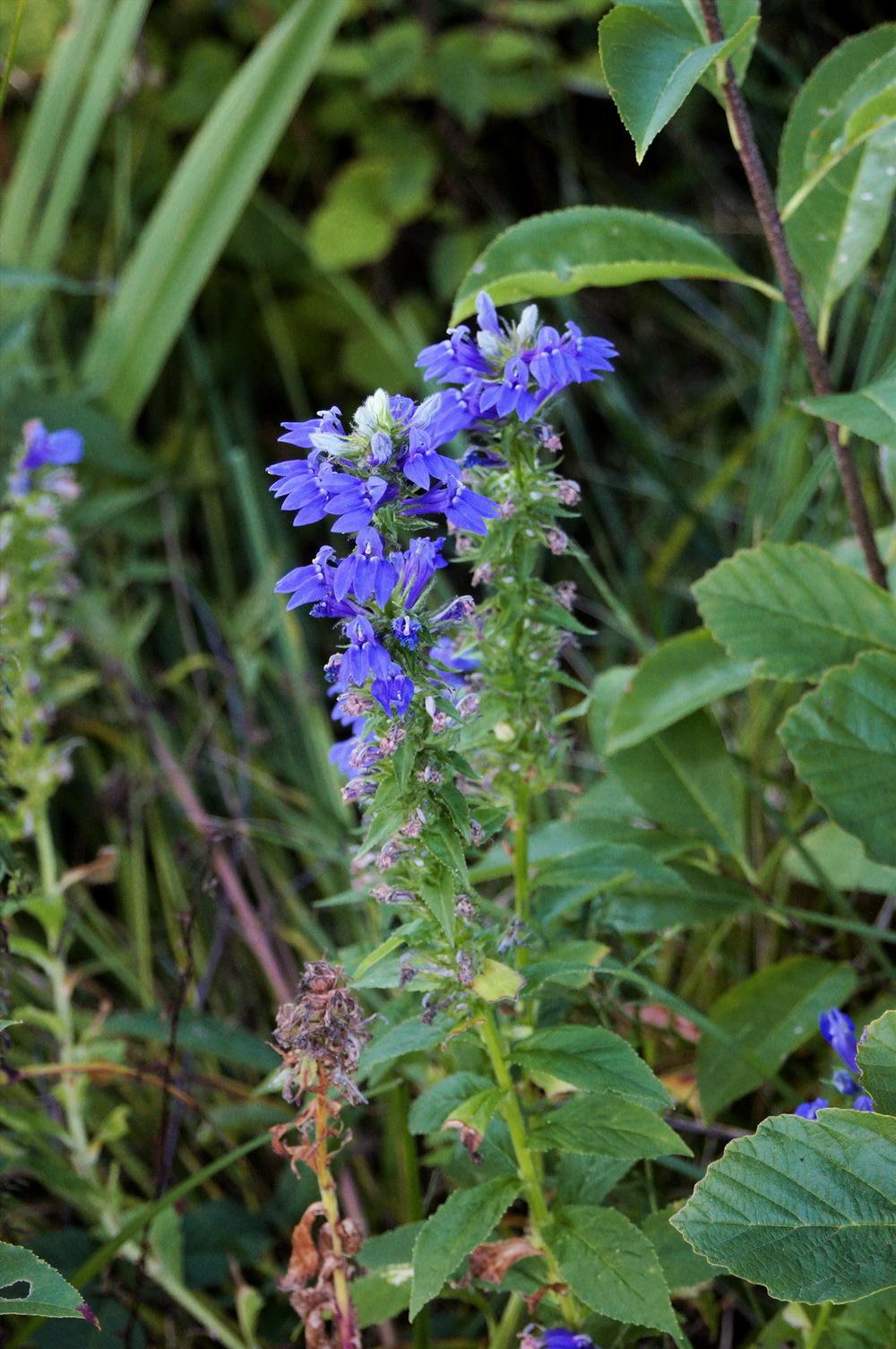 Blue flower perf clr_resize.jpg