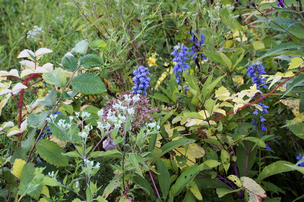 flowers perf clr_resize.jpg
