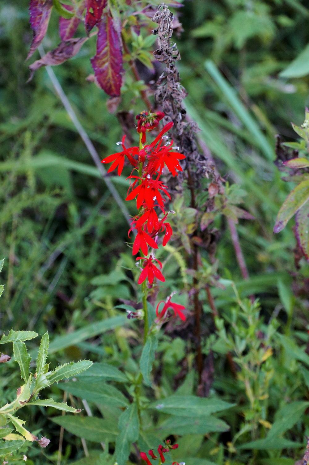 Red flower perf clr_resize.jpg