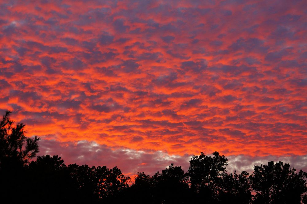 Sunset 11 perf clr.jpg
