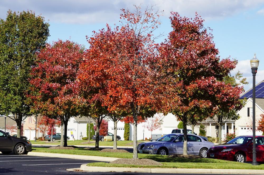 Parking Lot pc_resize.jpg