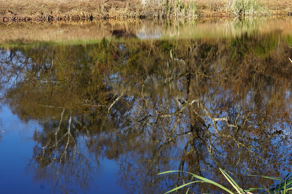 Storm water pond #1 reflection_resize.JPG
