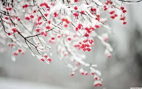 frozen berries.jpg