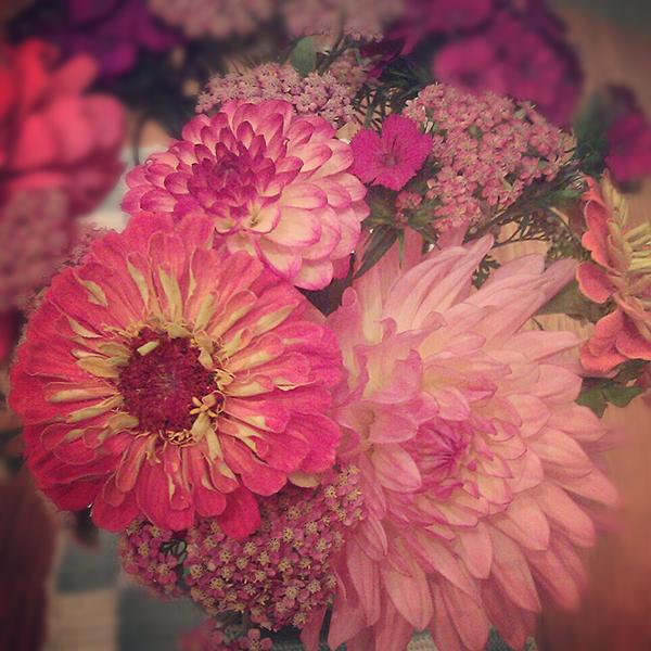 pink-zinnias.jpg