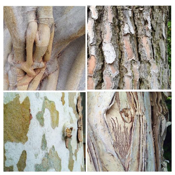bark_textures.JPG