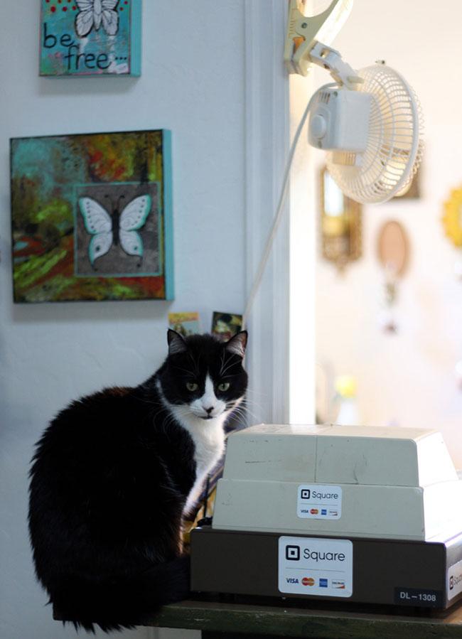 Zoey, the tuxedo cat