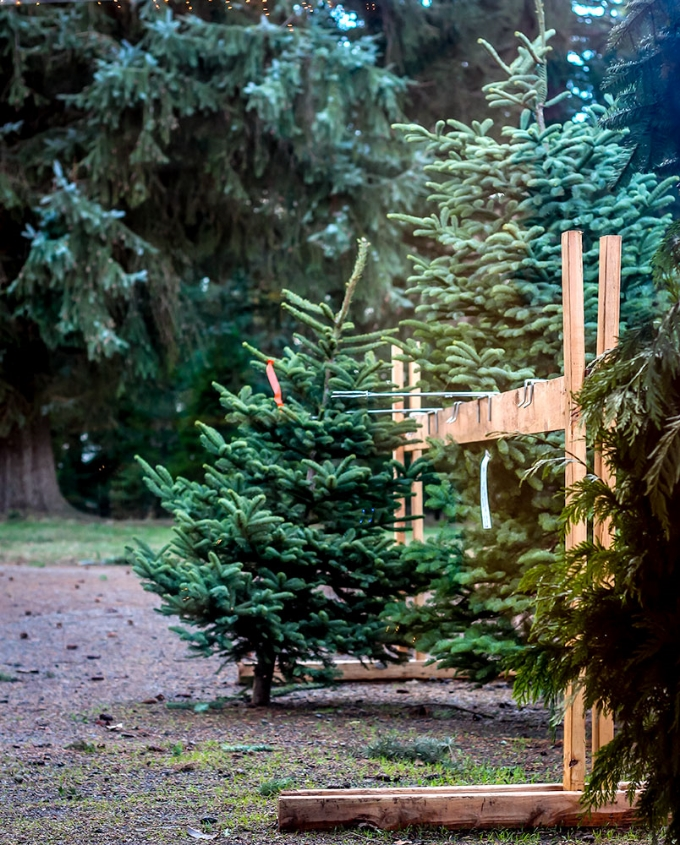 Victorhill Farm Trees