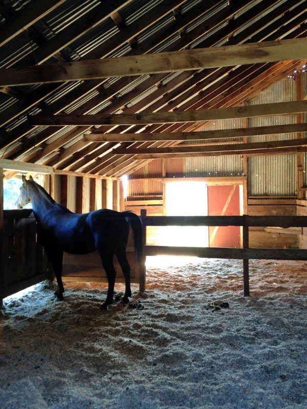 Sunlight streaming inside the tin barn, while Reyo looks out.