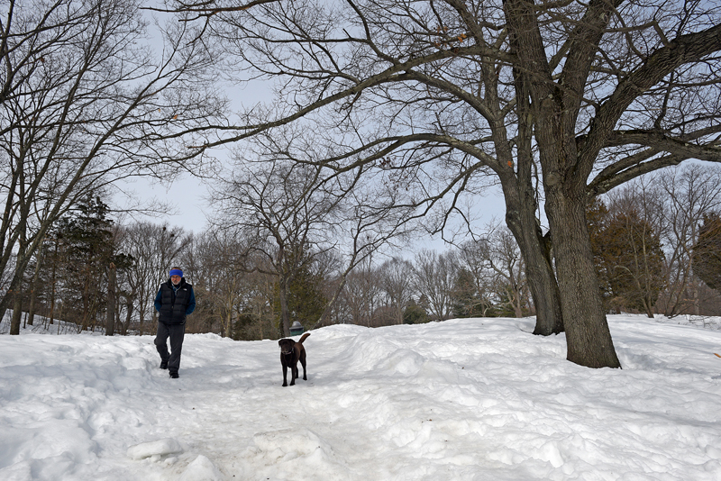 Josh Passell of Watertown walks his dog Luna at Beaver Brook Reservation in Waltham on a warm afternoon on Tuesday, Mar. 10, 2015.  (Wicked Local Staff Photo / Brett Crawford)