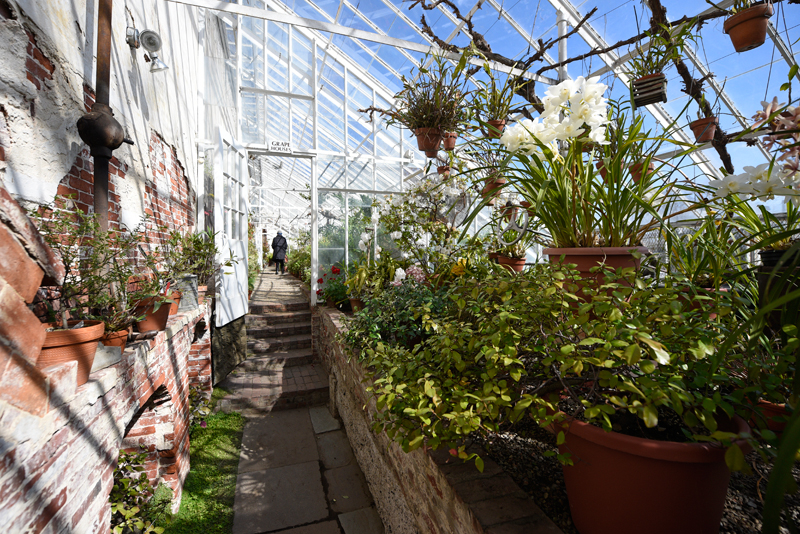 Flowers and plants bloom in the Lyman Estate Greenhouses in Waltham which provides a warm escape from the cold weather outside on Wednesday, Mar. 18, 2015 (Wicked Local Staff Photo / Brett Crawford)