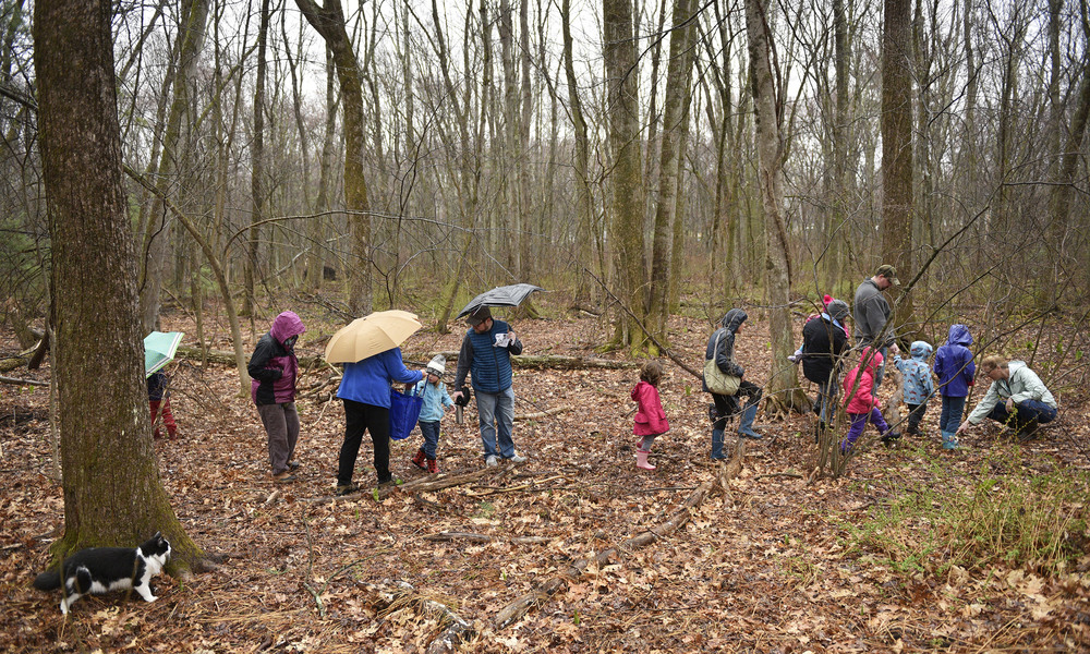 Rachel Goclawski of Maynard (far right) points out an animal track as she leads participants along a deer path in the woods behind her home as her Norwegian Forest cat, Sylvester, follows along closely during the educational walk on Saturday, Apr. 2, 2016.