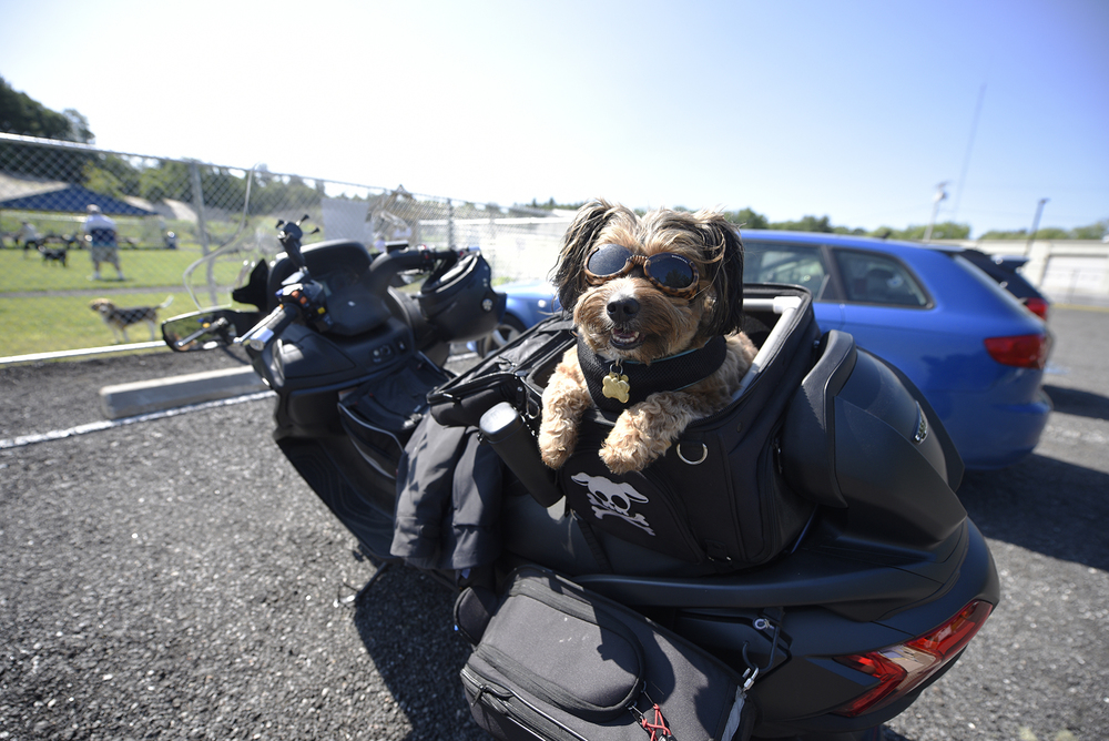 Chester sits in his seat on the motorcycle of his owner, Jim Ricca of Chelmsford, after visiting the new dog park in Chelmsford at 54 Richardson Rd. on Friday, June 24, 2016.