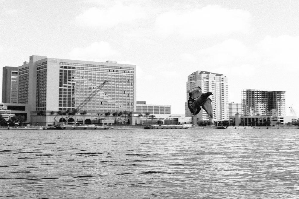Jacksonville_FL_2017-47.JPG