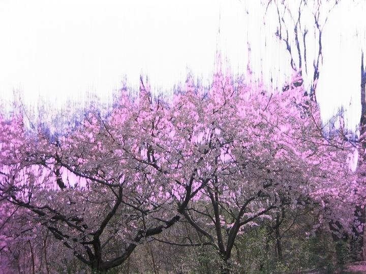 9_tree.JPG