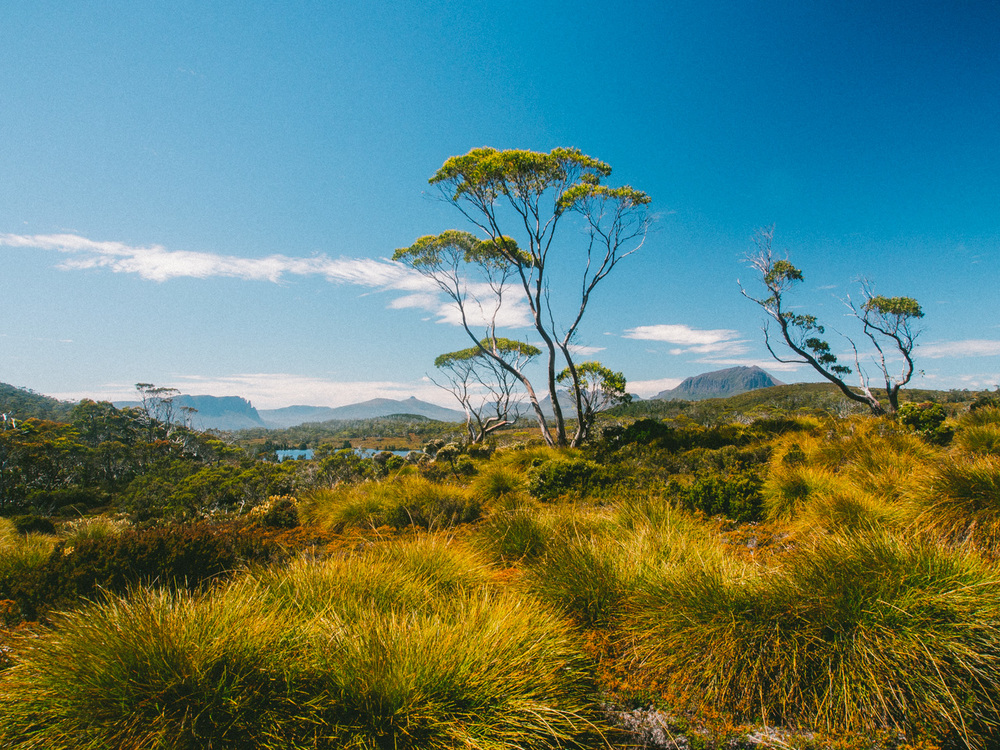 Overland Track Landscape with Lake Windermere in the background.