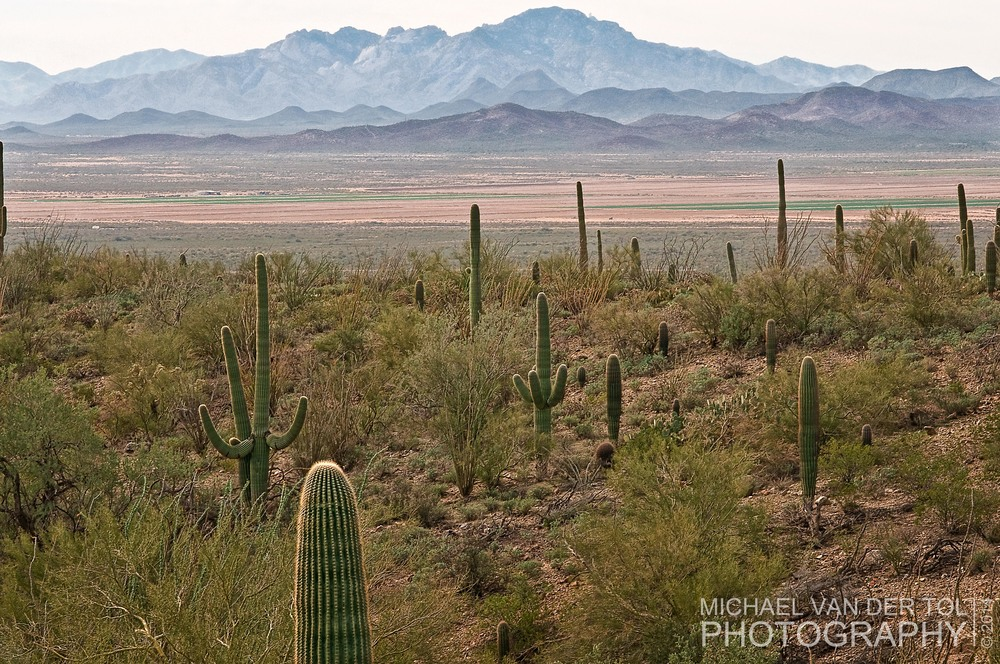 Saguaro Desert Museum near Tucson, AZ