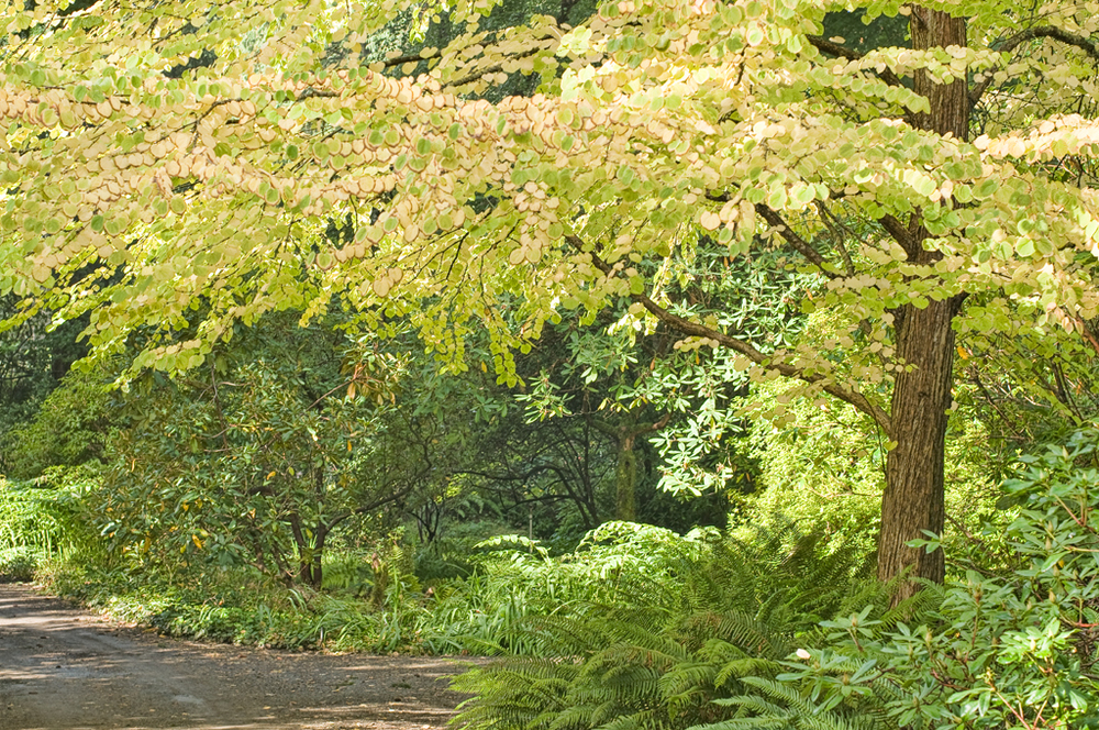 Katsuya, Milner Gardens