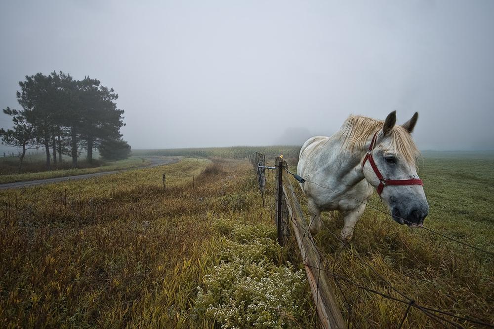 Huntley Horse Farm, Huntley, Ontario
