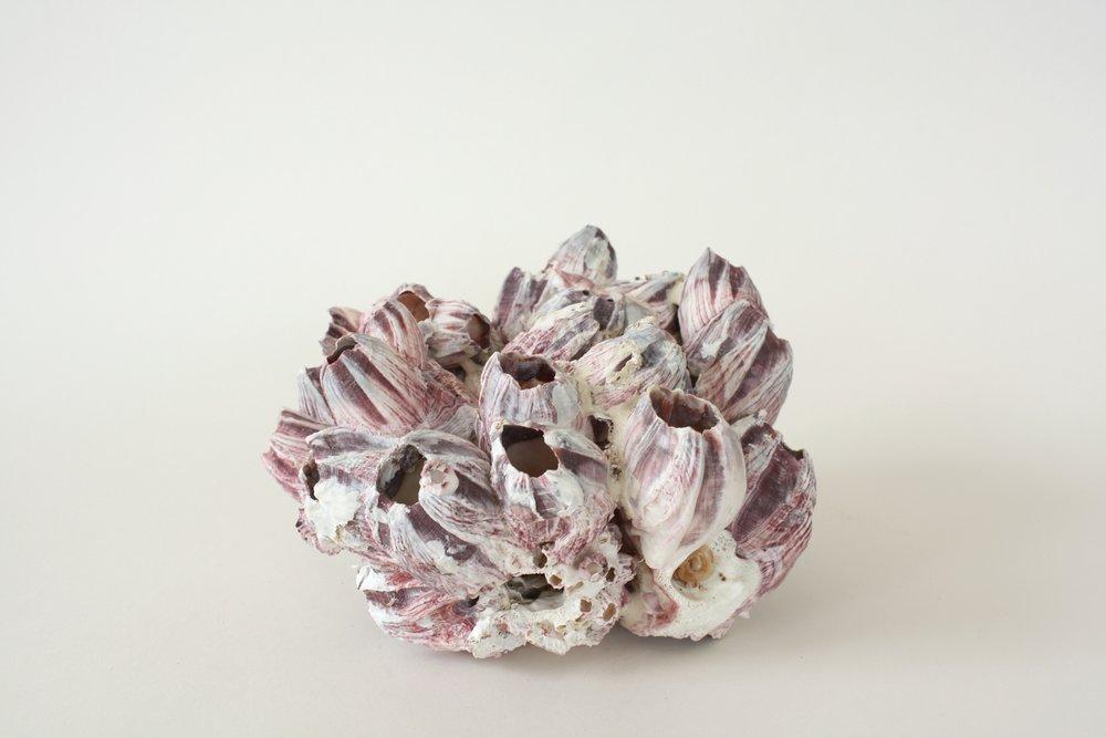 "barnacle | 4"" x 8"" | 5"