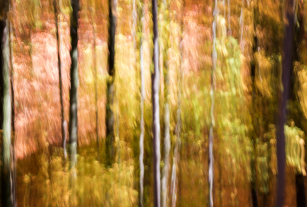 GOLDEN FORREST ABSTRACTION