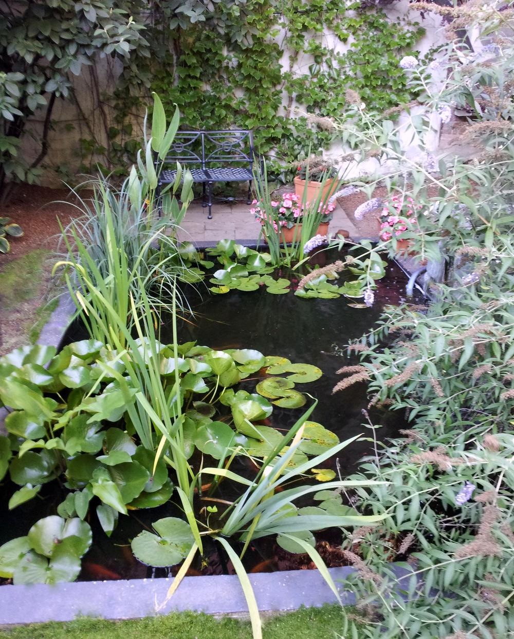 Pond 6.jpg