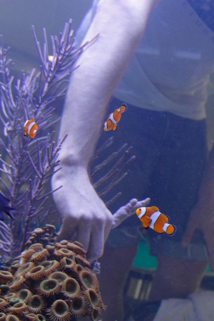 Noel Arm In Tank.jpg