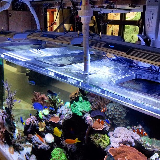 anchor_aquarium_brooklyn_reef