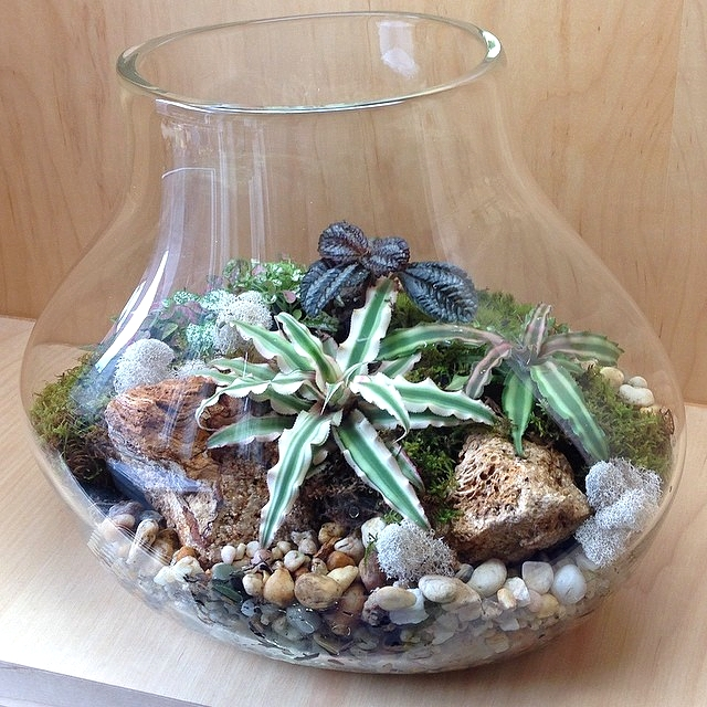 terrarium_anchor_brooklyn.jpg
