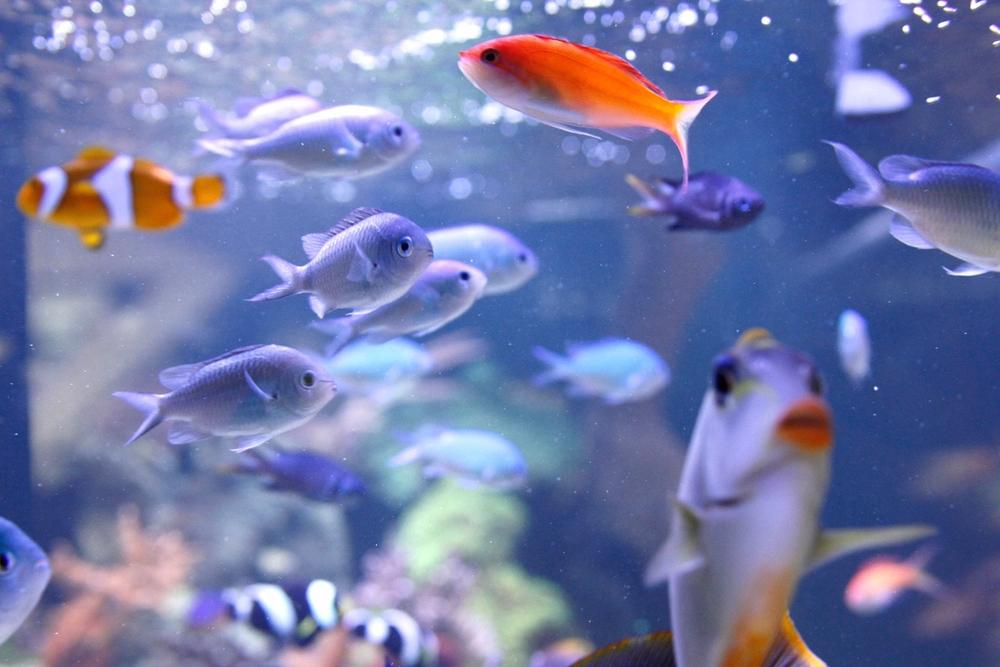 multifish.jpg