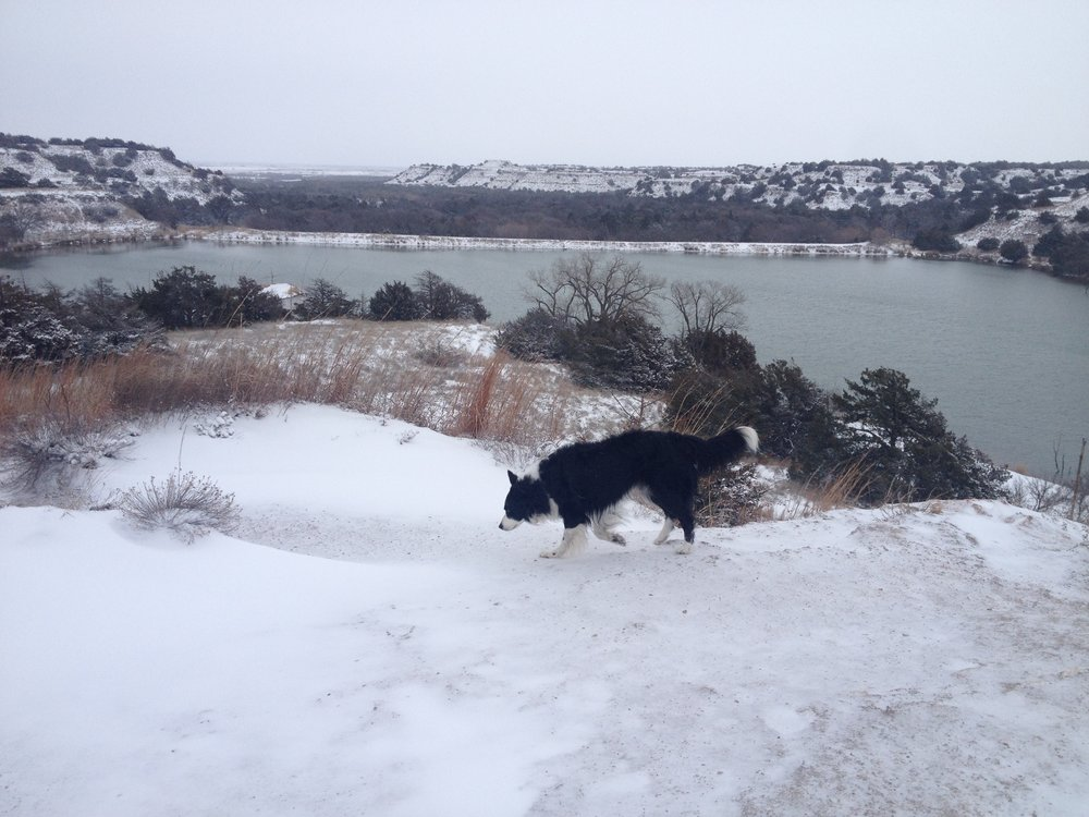 Border Collie on ice in Oklahoma