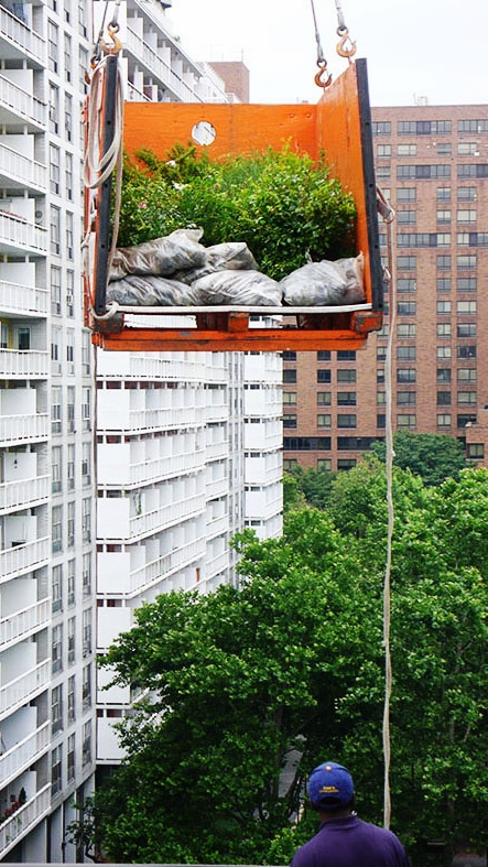 Yes, we Crane Plants and Soil to Rooftops