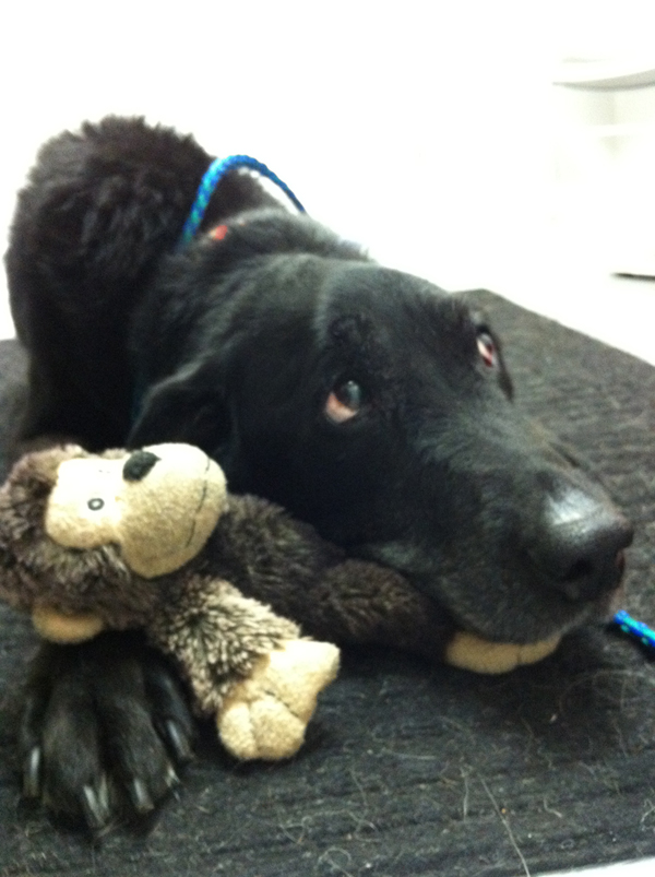 Phoebe at Vet with monkey.jpg