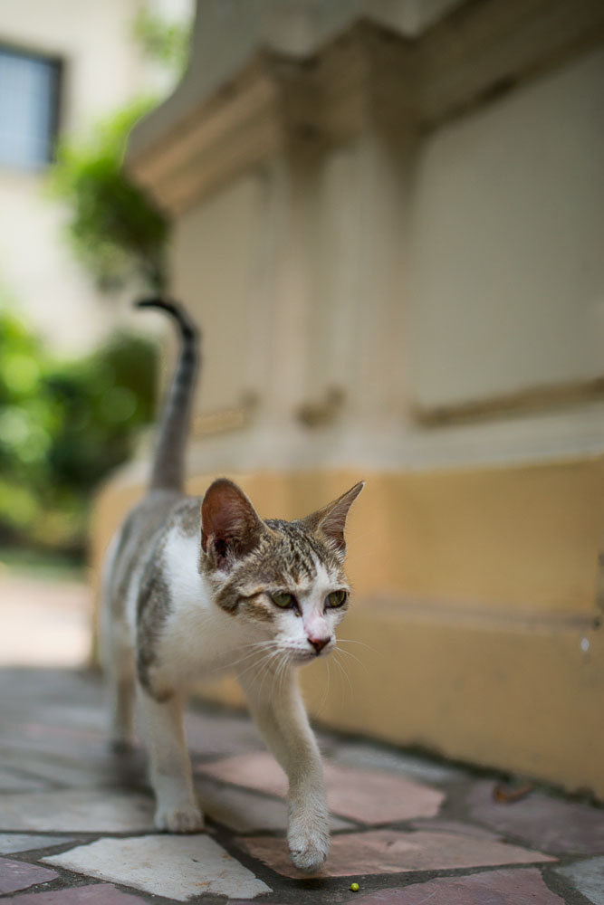 As you can see the depth of field is very narrow at f1.4 and the bokeh quite pleasing.
