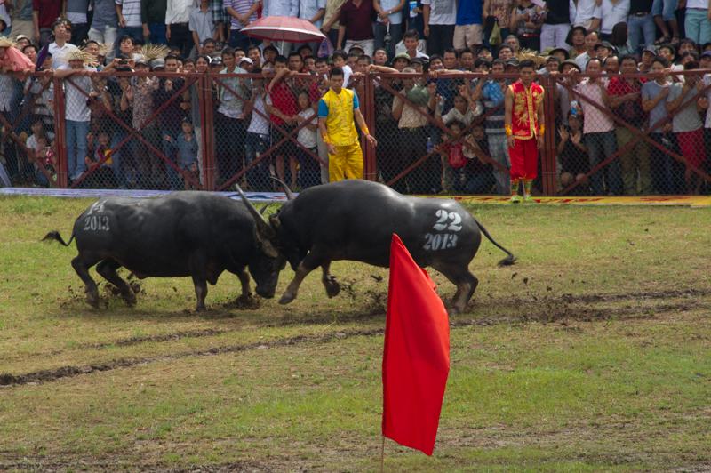 buffalo-37.jpg