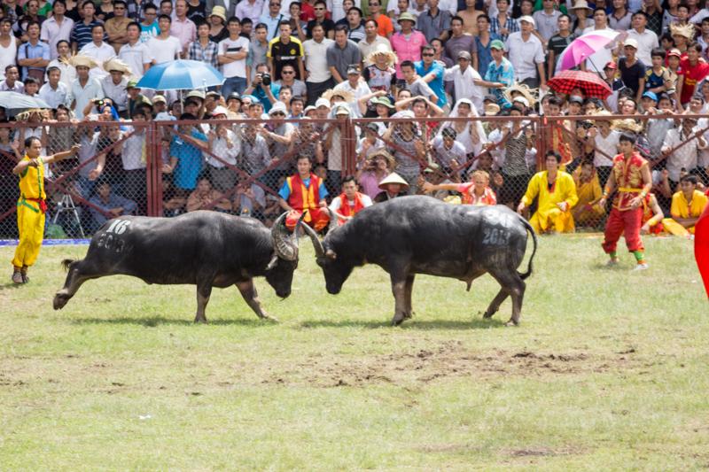 buffalo-43.jpg