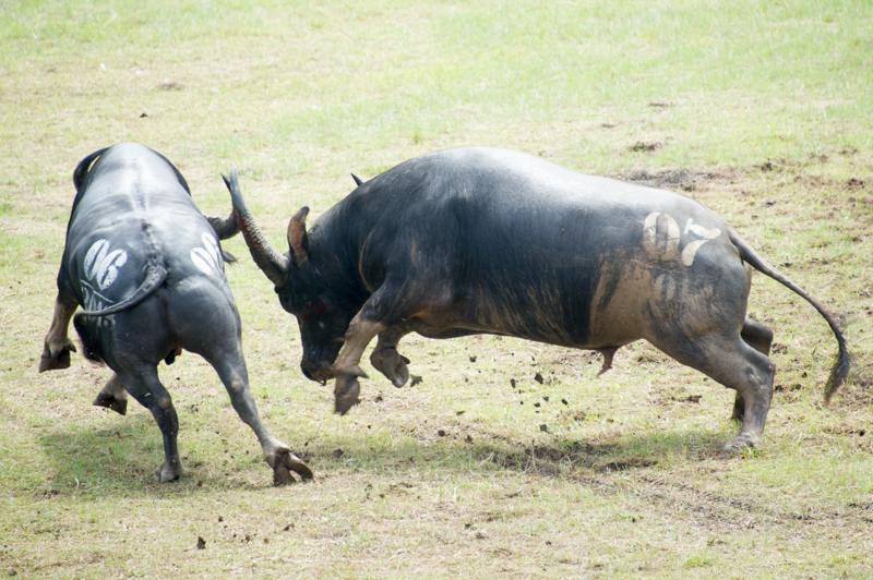 buffalo-47.jpg