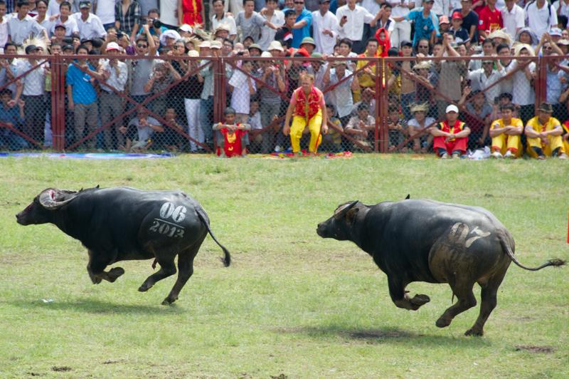 buffalo-48.jpg