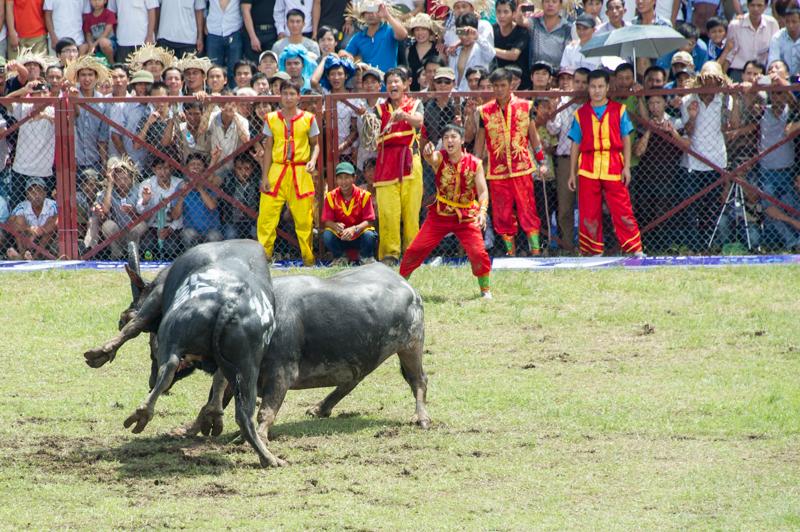 buffalo-54.jpg