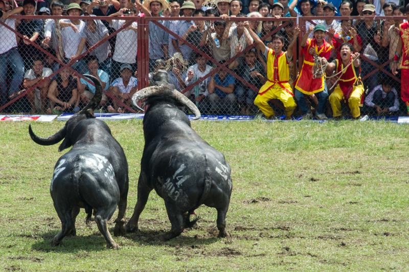 buffalo-53.jpg