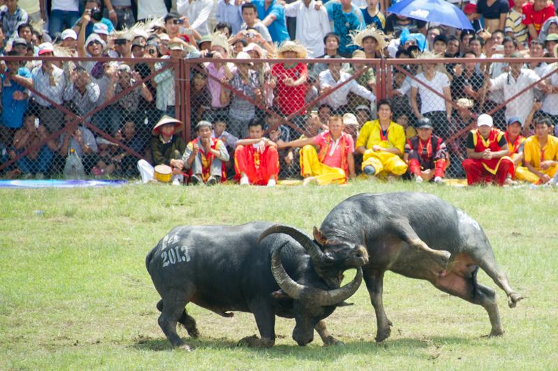 buffalo-55.jpg
