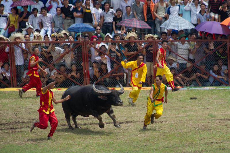 buffalo-58.jpg