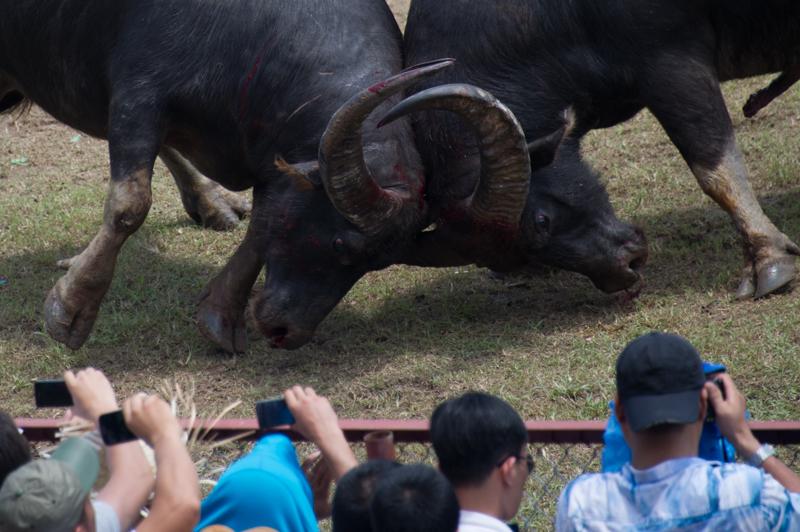 buffalo-64.jpg