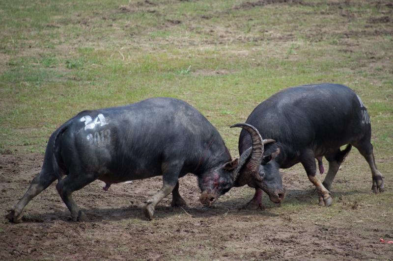 buffalo-66.jpg