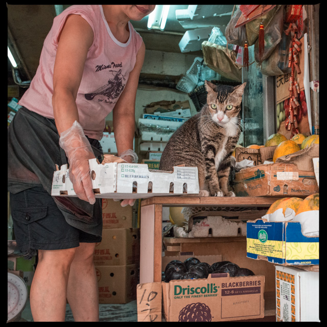 cats, a common sight at the markets