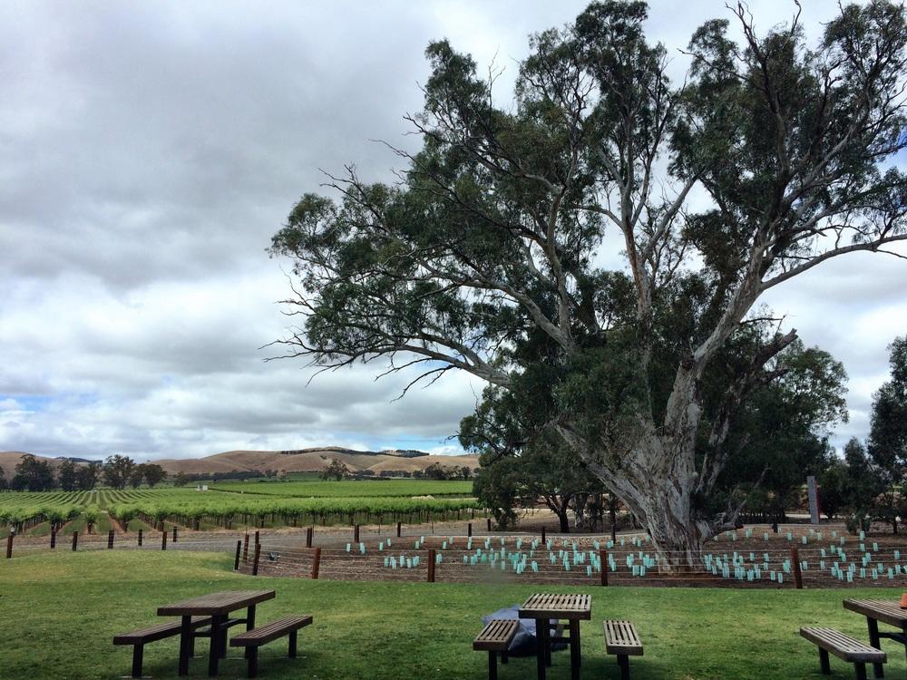 Jacob Creek Winery